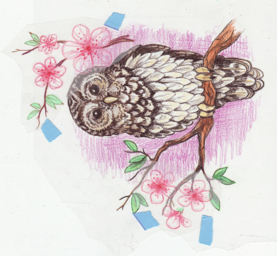 owl tattoo design by Kittencaboodles