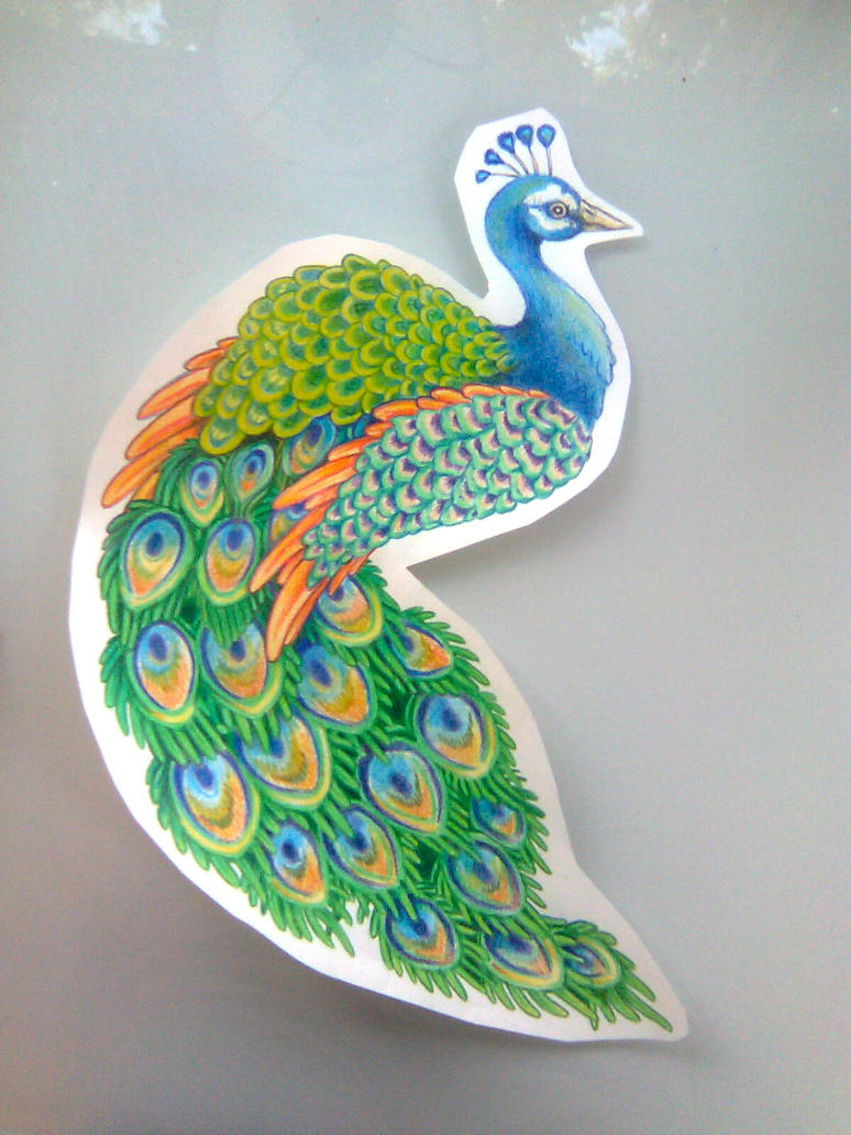 Simple colorful peacock drawing - photo#28