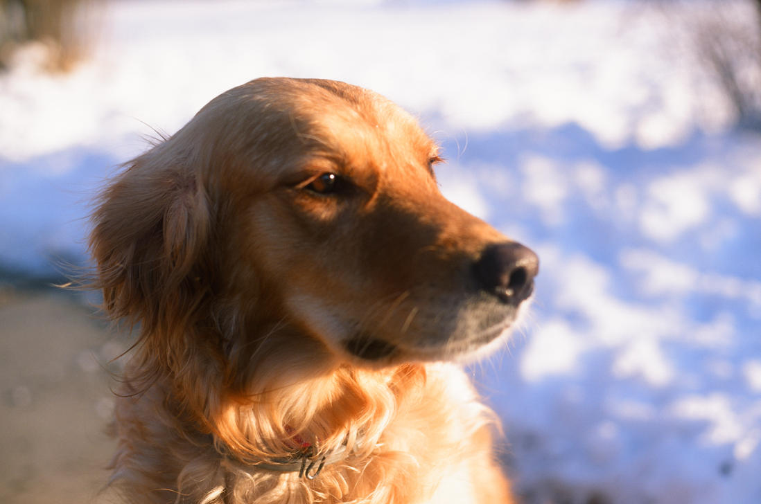 My Dog! by Volk-oseba