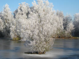 The frozen tree in the lake