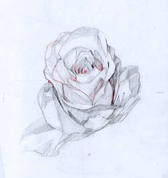 Flower drawing for tutorial by JesusAConde