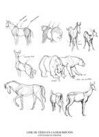 Dibujo Animal ep1