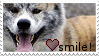Smile Akita Inu Stamp by Kitten-Kubb