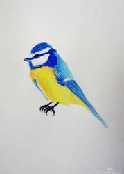Blue tit by artbyellie