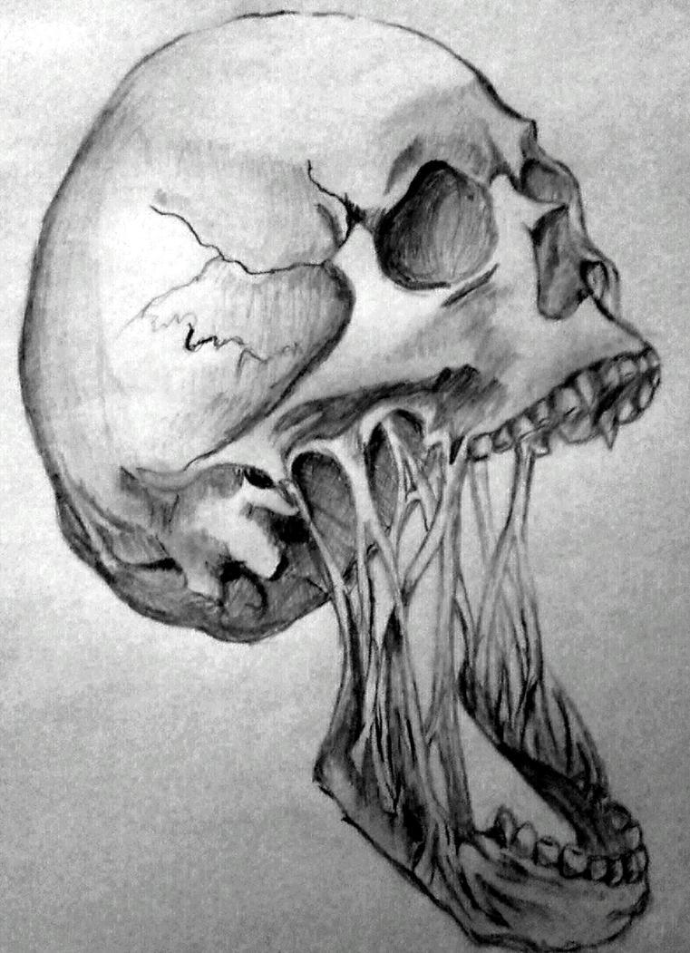 Horror Skull By Angeli7 On DeviantArt