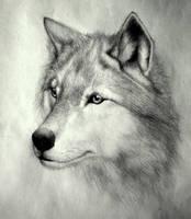 Wolf by soulmag
