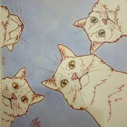 Mem cats