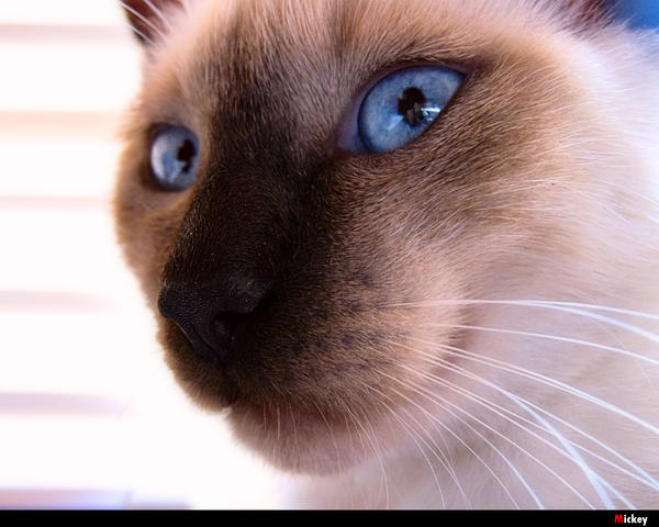 Blue Eyes by NickoTyn