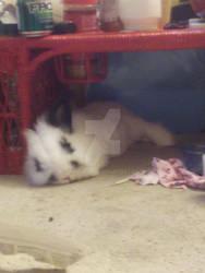 Shhh, bunny is sleeping...