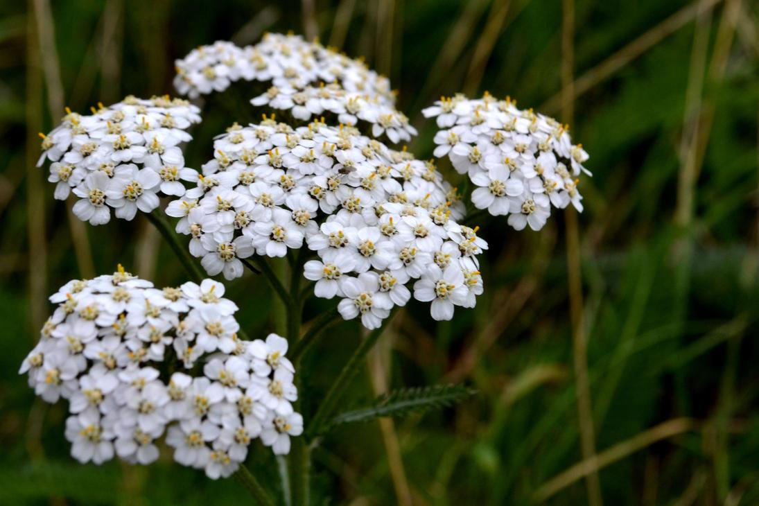 Macro Flowers by BlueshinePhotography
