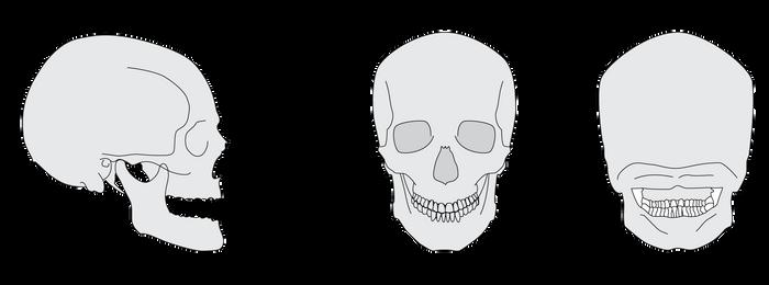 Skull by elitassj4