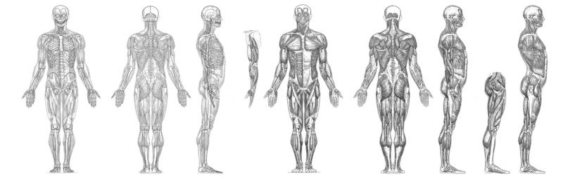 My Muscle Anatomy Reference Hi Rez