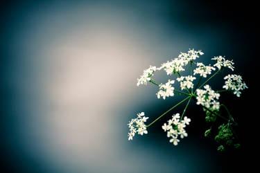 Flower. by Treke
