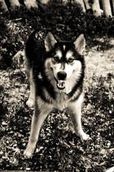 Wolf by Treke
