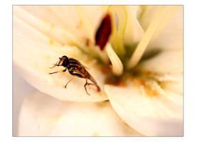 Flowers is my life by Treke