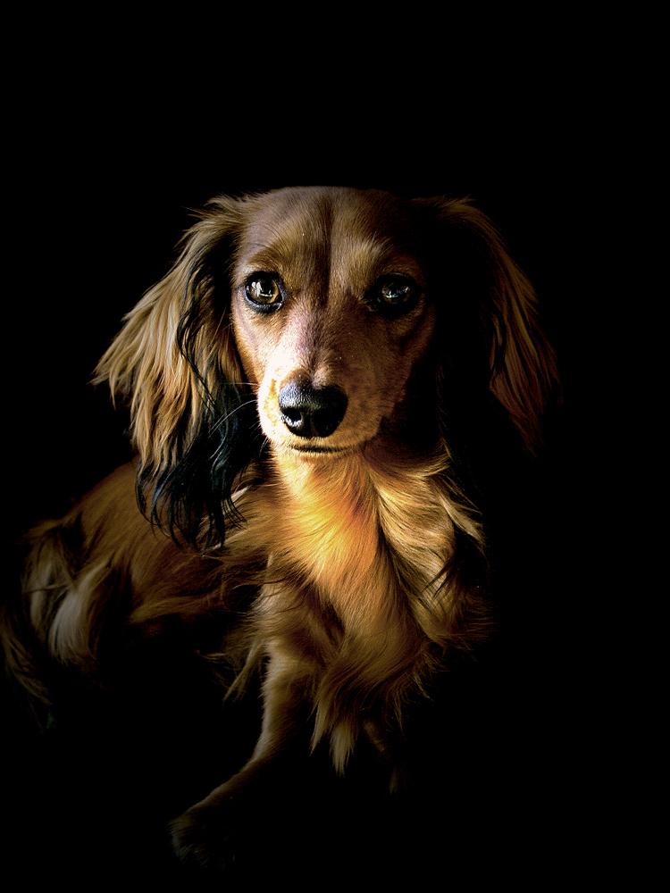 Cute Dog by Treke
