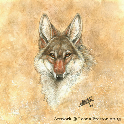 Coyote head drawing - photo#4