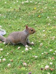 Handsome Squirrel