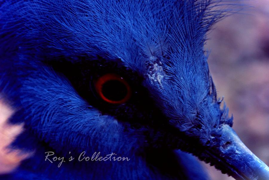 Blue Jay Philosophy by RoyWicaksono