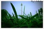 Hijau kan Indonesiaku.. by RoyWicaksono