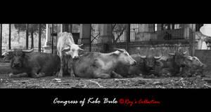 Congress of Kebo Bule by RoyWicaksono