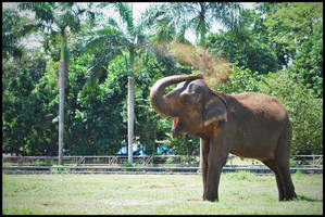 Sumatran Elephant by RoyWicaksono
