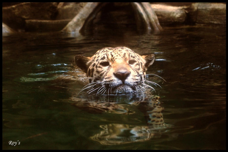 Wet Jaguar by RoyWicaksono