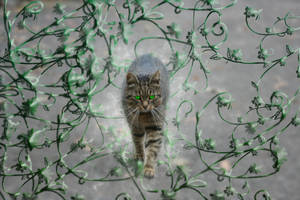 Kitty cat by jablar