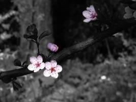 Spring flowers by jablar