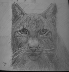 Big cat by jablar