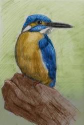 KingFisher coloured by jablar