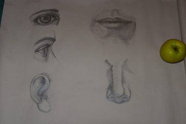 Face study by jablar