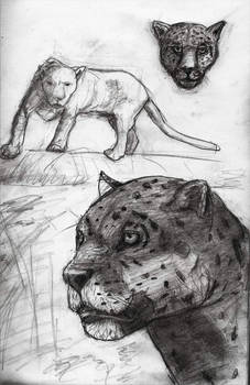 Jagu free sketch