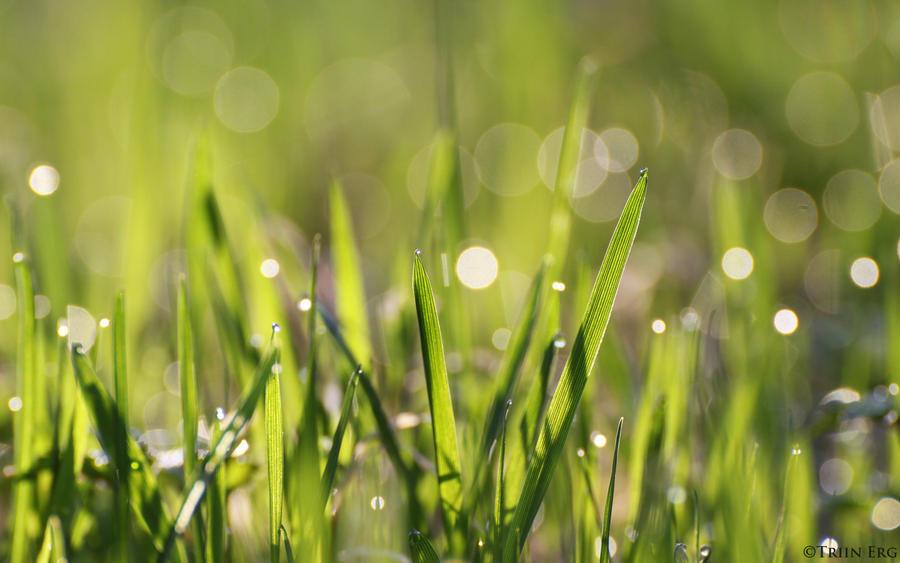 x - Morning grass by TriinErg