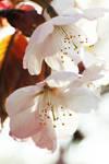 x - Blossoms