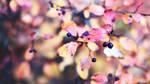Autumn Aronia by TriinErg