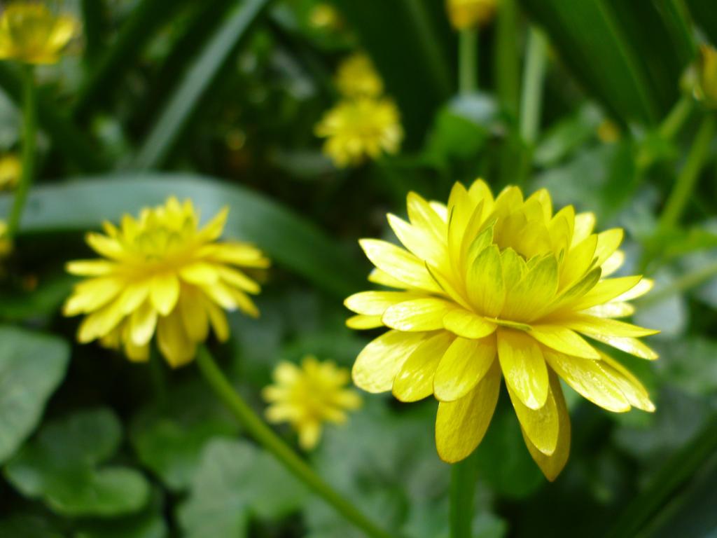 Pretty Yellow Flowers By Laurenisacrazyllama On Deviantart