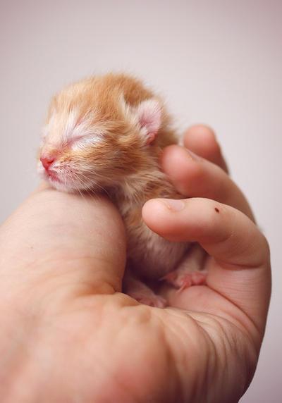 Newborn by Ashitaro
