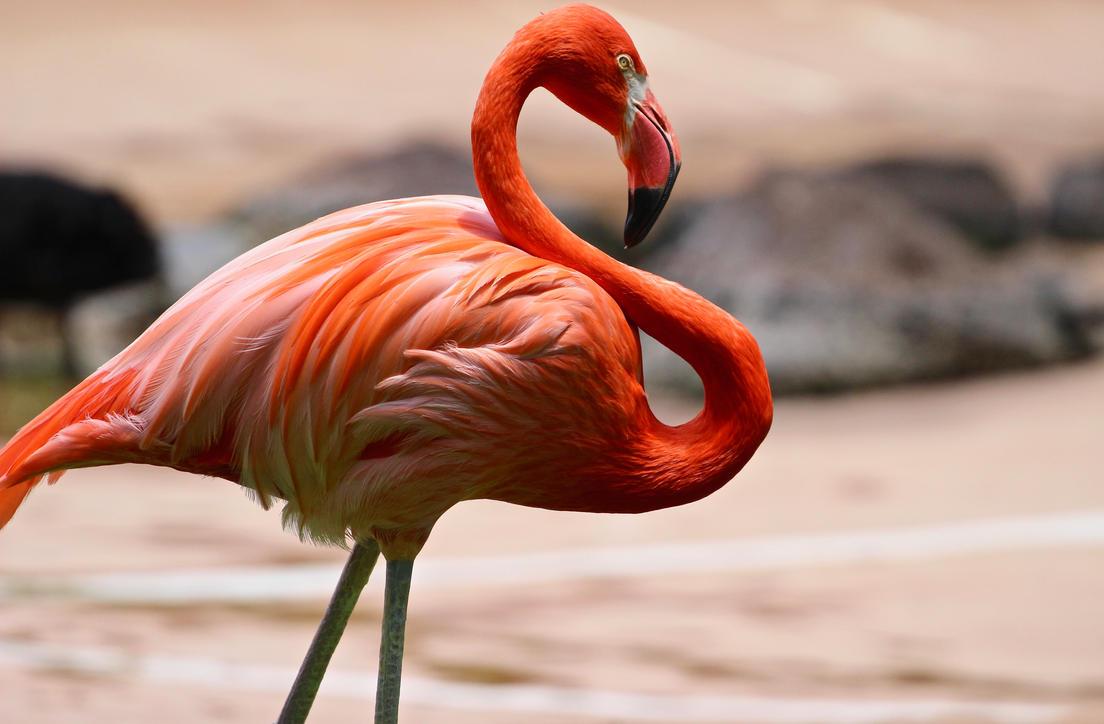 Pink Swimmingo by fartprincess