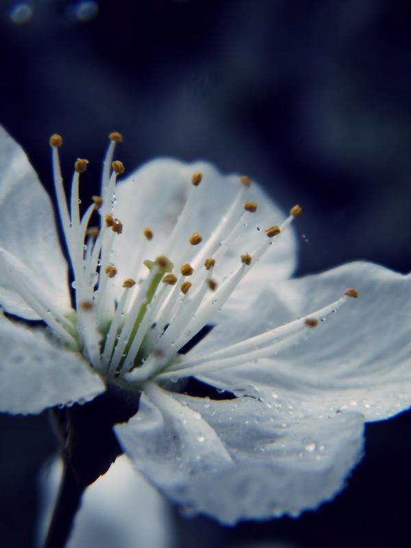 Blue Spring by Vihartancos