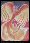 ACEO Phoenix