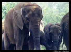 Pittsburgh's Elephant Family