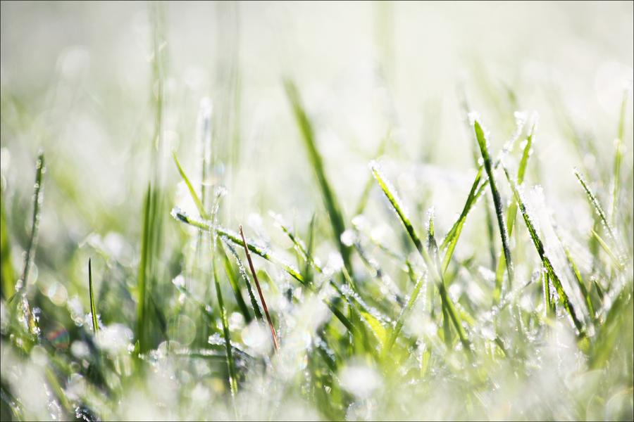 Winter grass by Irym ...
