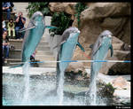 At the dolphin show