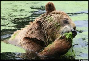 Veggie bear by Lunchi