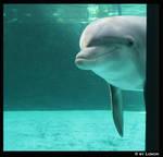 Dolphin outside my window