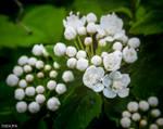 Photo8. Nature