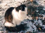 Photo54. Cat 5