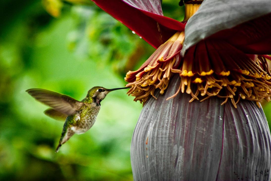 Spring Nectar by SomaKun