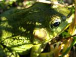 Friendly Frog by Maethori